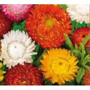 Flori - flori de pai mix n98