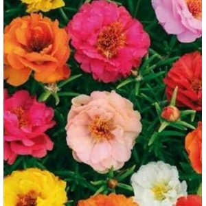 Flori - flori de piatra mix n32