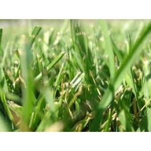Seminte iarba coasa 10kg