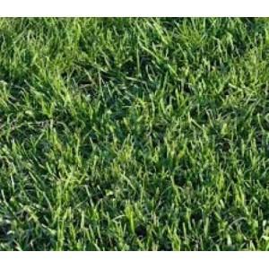 Seminte iarba pasune 10 kg