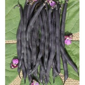 Seminte fasole purple teepee