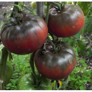 Seminte tomate negre noire de crimee
