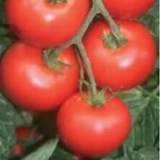 Seminte tomate alvaro f1 100 sem